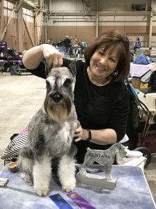 "Centara Magic Memory ""Mia"" received two 3 point majors toward her AKC Championship"